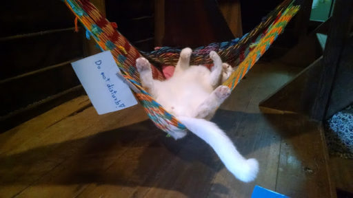 Niesom milovník mačiek ale po týždni na Krabi som sa naučila s nimi žiť, keďže boli všade :)