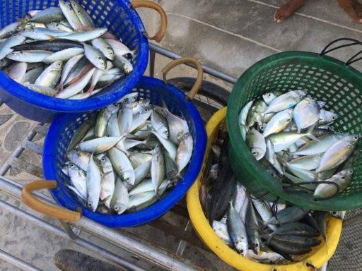 Celé pobrežie bolo plné rýbárov s čerstvými úlovkami