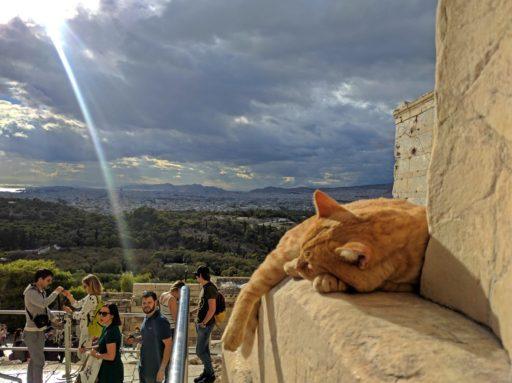 Všade! Na ulici, v kaviarňach, v smetných košoch, parkoch, dokonca aj odpočívajúce na samom vrchole Parthenonu