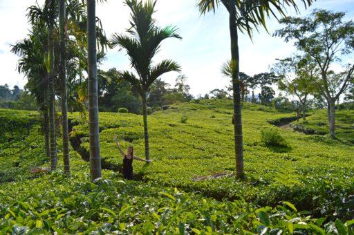Nádherne rozvoniavajúce čajové plantáže